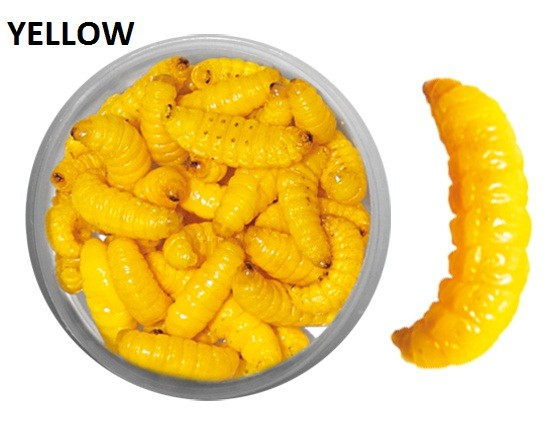 35 Count Preserved Wax Worms - Yellow