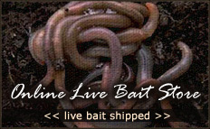 Bait Express Shipping