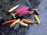 Maggots - Mixed